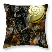 Snail, Pointe-des-cascades, Quebec Throw Pillow