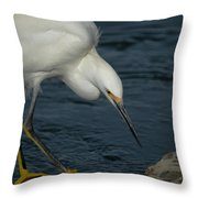 Snowy Egret 8 Throw Pillow