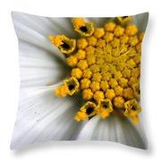 Sonata Cosmos White Throw Pillow