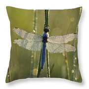 Southern Skimmer Orthetrum Brunneum Throw Pillow