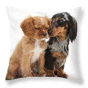Spaniel & Dachshund Puppies Throw Pillow by Mark Taylor