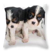 Spaniel Puppies Throw Pillow