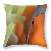 Spinecheek Anemonefish In Anemone Throw Pillow
