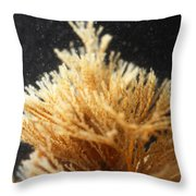 Spiral-tufted Bryozoan Throw Pillow
