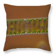 Spirogyra Sp. Algae Lm Throw Pillow