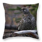 Spruce Grouse Throw Pillow
