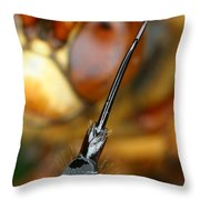Stinger Of The Cicada Killer Wasp Throw Pillow