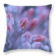 Stonecrop Flowers Emerge On An Early Throw Pillow
