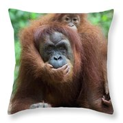 Sumatran Orangutan Pongo Abelii Mother Throw Pillow
