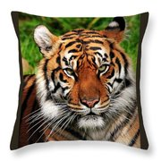 Sumatran Tiger Portrait Throw Pillow