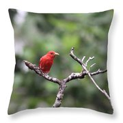 Summer Tanager Throw Pillow