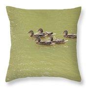 Swimming Ducks Throw Pillow by Corinne Elizabeth Cowherd