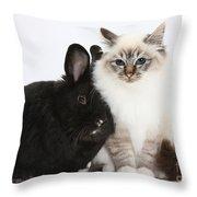 Tabby-point Birman Cat And Black Rabbit Throw Pillow