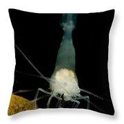 Texas Cave Shrimp Throw Pillow