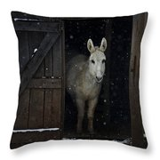 The White Mule Throw Pillow