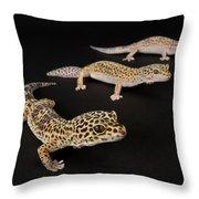 Three Female Leopard Geckos Eublepharis Throw Pillow
