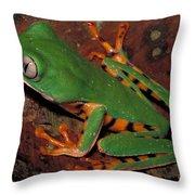 Tiger-striped Monkey Frog Throw Pillow