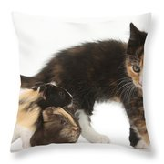 Tortoiseshell Kitten With Baby Throw Pillow