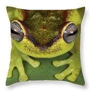 Tree Frog Hyla Rubracyla At Night Throw Pillow