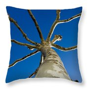 Tree With Branches Throw Pillow