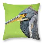 Tricolor Heron Portrait Throw Pillow