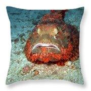 Tropical Fish Scorpionfish Throw Pillow