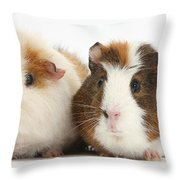 Two Guinea Pigs Throw Pillow
