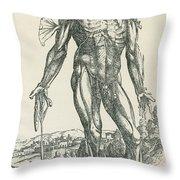 Vesalius De Humani Corporis Fabrica Throw Pillow by Science Source
