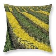 Vineyards In Californias Edna Valley Throw Pillow