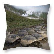 Volcan Alcedo Giant Tortoise Geochelone Throw Pillow
