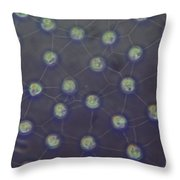 Volvox Aureas Algae Lm Throw Pillow