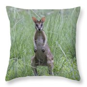 Wally Throw Pillow