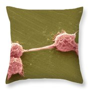 Water Biofilm With H. Vermiformis Cysts Throw Pillow