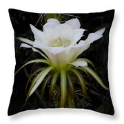 White Echinopsis Flower  Throw Pillow