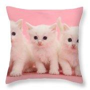 White Kittens Throw Pillow