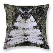 White Underwing Moth Throw Pillow