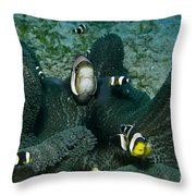 Whole Family Of Clownfish In Dark Grey Throw Pillow