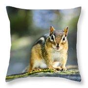 Wild Chipmunk Throw Pillow