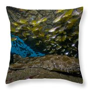 Wobbegong Shark And Cardinalfish, Byron Throw Pillow