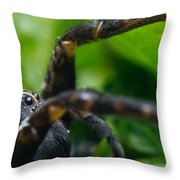 Wolf Spider And Babies 2 Throw Pillow