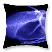 X-ray Of A Clown Triggerfish Throw Pillow