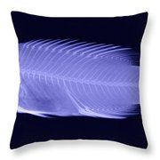 X-ray Of A Wrasse Fish Throw Pillow