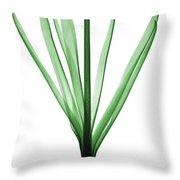 X-ray Of Hyacinth Throw Pillow