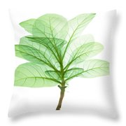X-ray Of Tobacco Throw Pillow