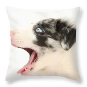 Yawning Border Collie Pup Throw Pillow