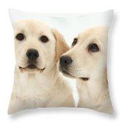 Yellow Labrador Retriever Pups Throw Pillow