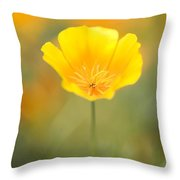 Yellow Poppy Flower, Mount Hood Throw Pillow