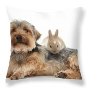 Yorkshire Terrier Dog And Baby Rabbit Throw Pillow