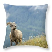 Young Bighorn Sheep, Windy Point Throw Pillow