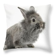 Young Silver Lionhead Rabbit Throw Pillow